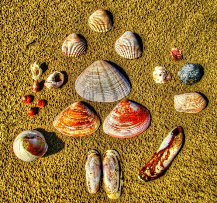 Shells on Beach_Small tonemapped