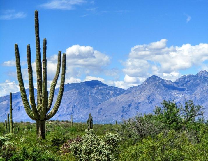 Saguaro Cactus 2_Small tonemapped