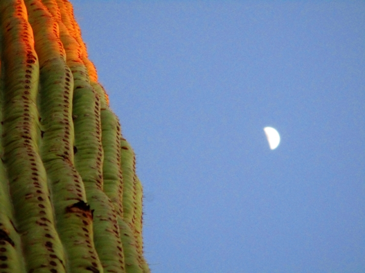 Saguaro Moon_tonemapped - Copy