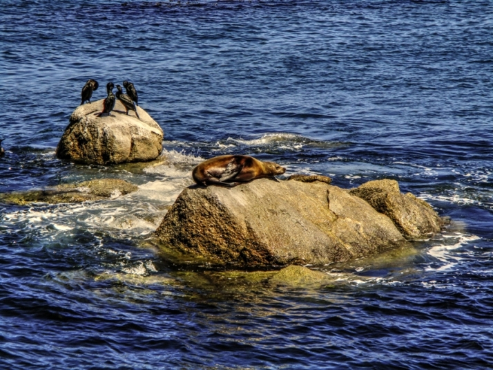 Seal Birds Small_tonemapped