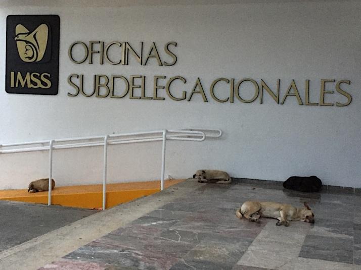 Final dog siesta