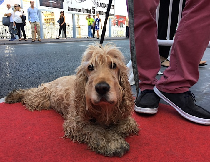 Dog on red carpet