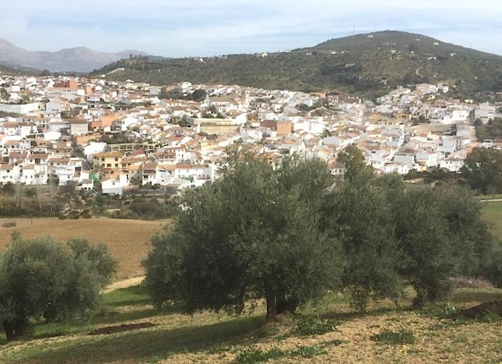 Riogordo olive orchard