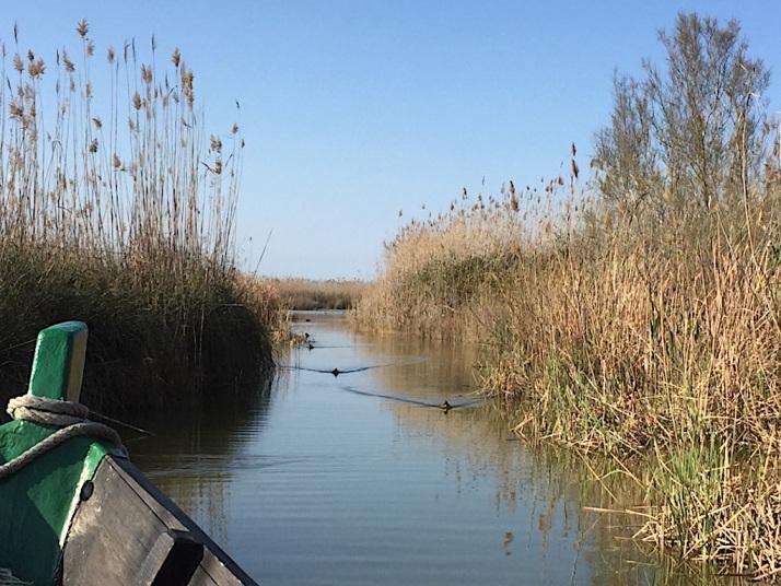 Albufera Boat in canal